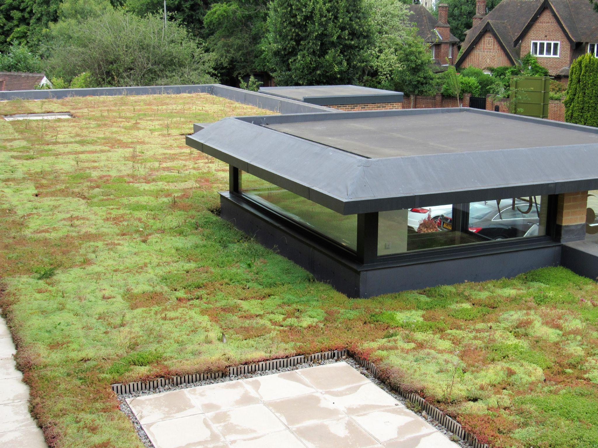 M Tray Sedum Green Roof Module 500x500x100mm